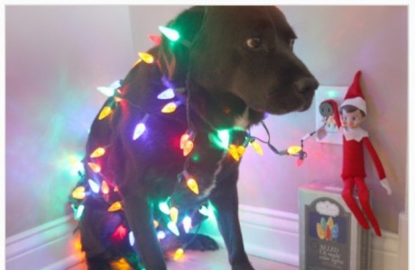 DogLights